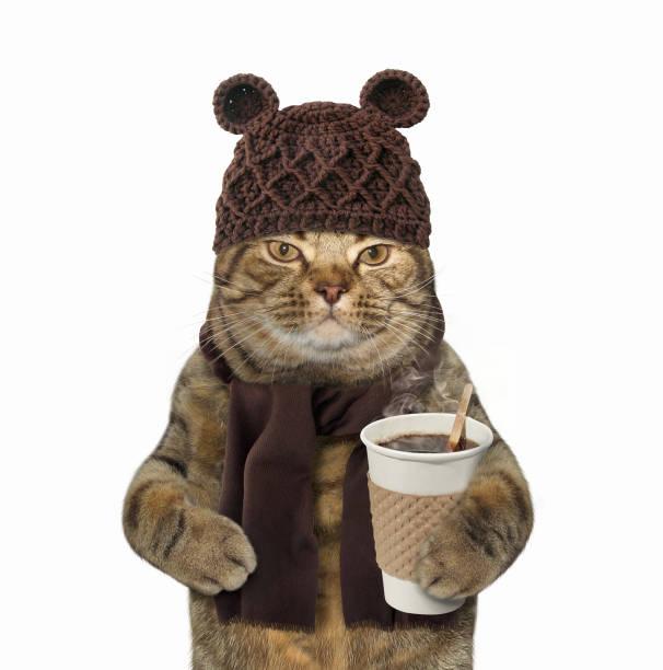 katze in gestrickt hatte mit kaffee - kaltes wetter stock-fotos und bilder