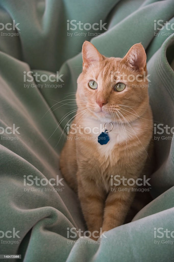 Cat In laundry basket stock photo