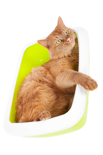 Cat in litter box picture id616134074?b=1&k=6&m=616134074&s=612x612&w=0&h=fwttlqn 28a4qfgoknolerruuyvaemvyohxlzeie5b0=