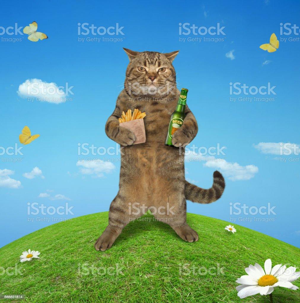 Cat in meadow 1 stock photo