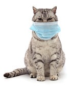 Cat in medical mask isolated on white background.