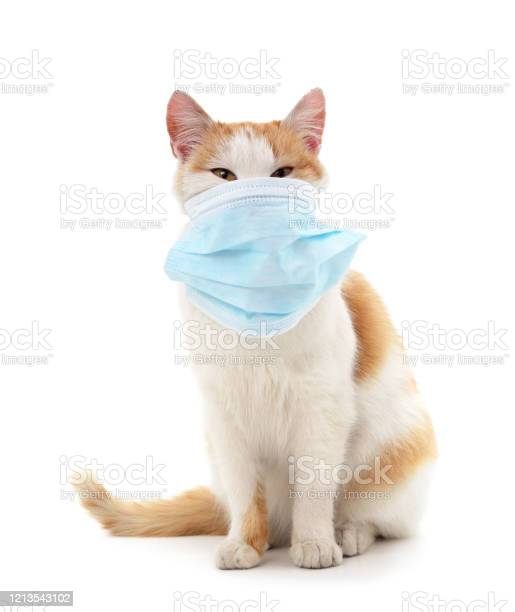 Cat in medical mask picture id1213543102?b=1&k=6&m=1213543102&s=612x612&h=ga8agbcpqthyxu jyykv6h7 12sexc6wp1htwajcq2g=