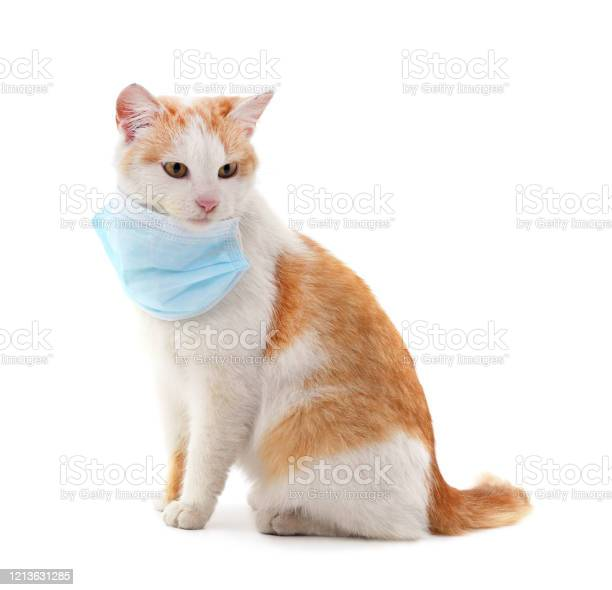 Cat in medical mask picture id1213631285?b=1&k=6&m=1213631285&s=612x612&h=g53zxd1gutsvgow xjjr271pgkejmabjg4y8qnwjtfc=