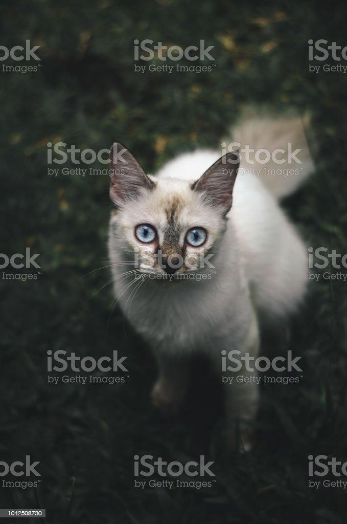 cat in nature stock photo