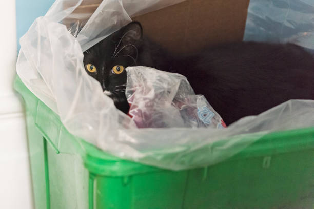 Cat in odd place hiding in recycling bin. stock photo