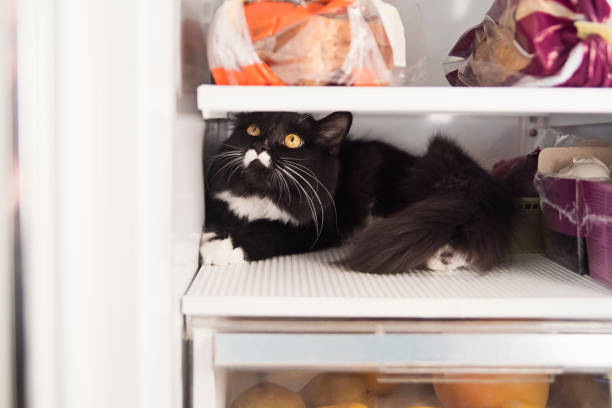 Cat in odd place hiding in the refrigerator. stock photo