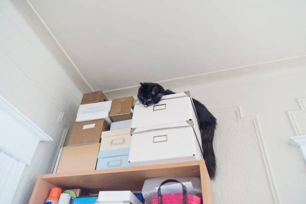 Cat in odd place hiding on top of boxes near ceiling. stock photo