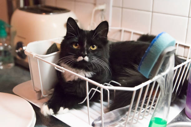 Cat in odd place resting in dish drainer rack. stock photo