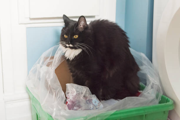 Cat in odd place stretching in recycling bin. stock photo