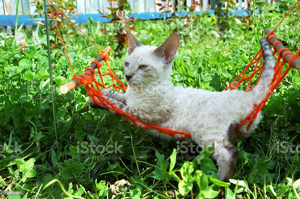 cat in orange hammock royalty-free stock photo