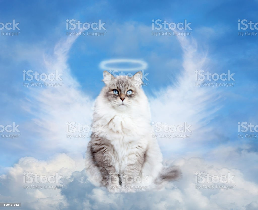 cat in paradise - foto stock