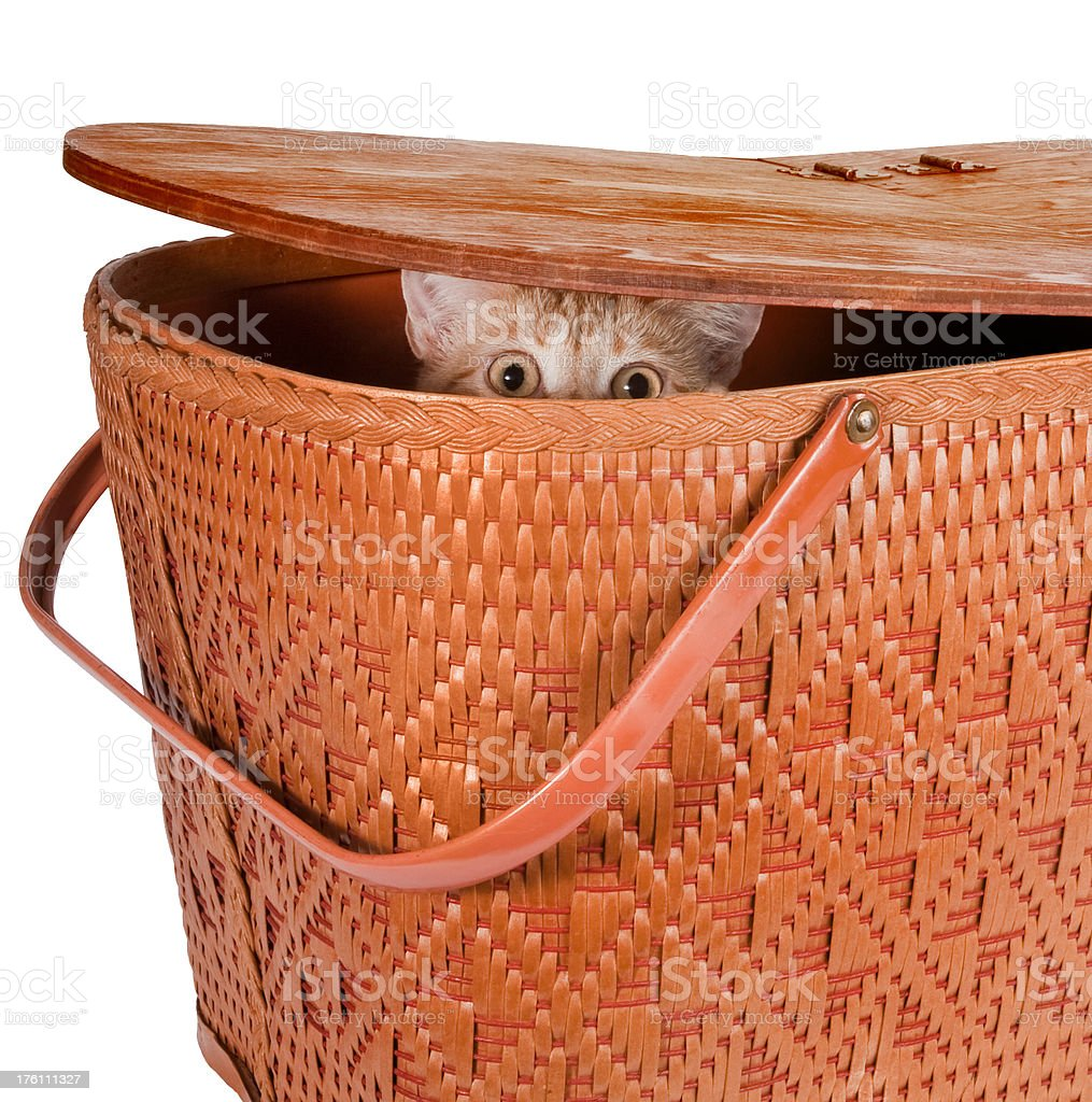 cat in picnic basket royalty-free stock photo