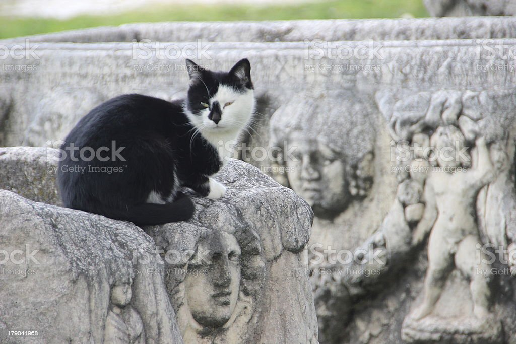 Cat in ruins royalty-free stock photo
