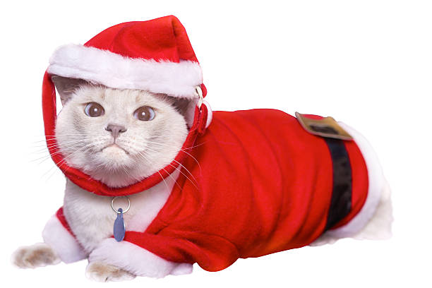 Cat In Santa Claus Costume stock photo