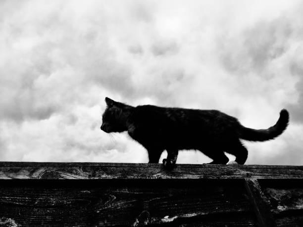 Cat in silhouette walking on a fence picture id1097930180?b=1&k=6&m=1097930180&s=612x612&w=0&h=yhlbg6ncierotumtguzfw6eh0 xb7fubcjtthbuzbtc=