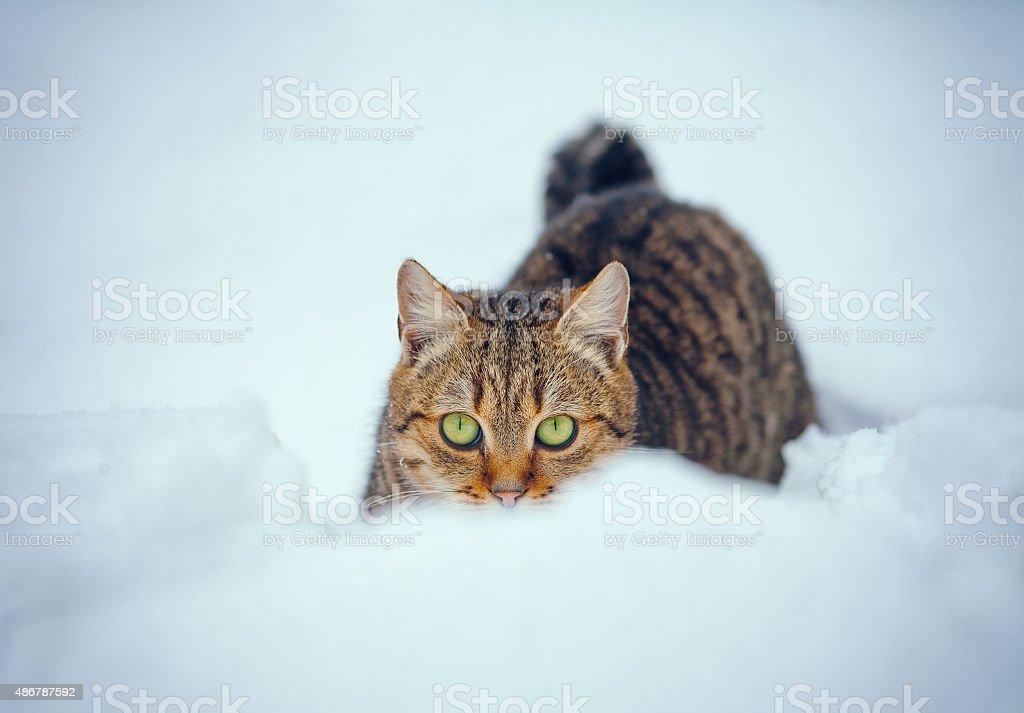 Cat in snow stock photo