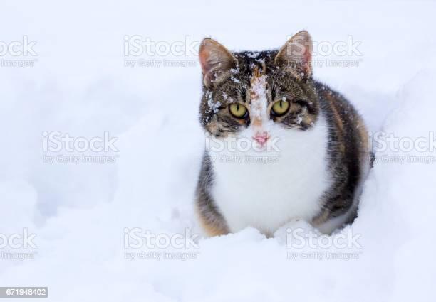Cat in snow picture id671948402?b=1&k=6&m=671948402&s=612x612&h=oer2bayatw06v2ylkubzeejmy9i3cactuf3jib0ctw8=