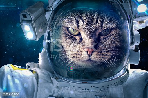 istock Cat in space 825635122