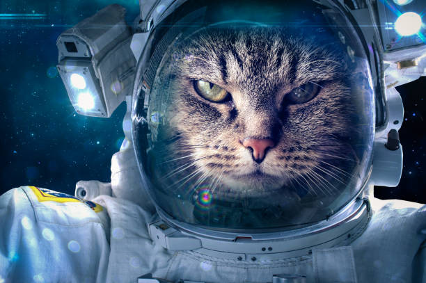 cat in space - space exploration stock photos and pictures