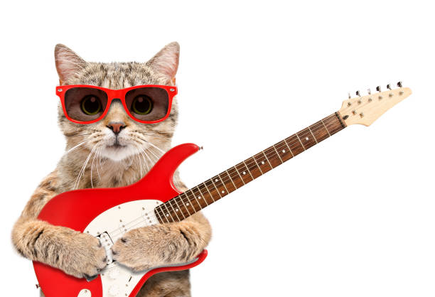 Cat in sunglasses with electric guitar isolated on white background picture id1181825544?b=1&k=6&m=1181825544&s=612x612&w=0&h=hjaevmuh hlmjx92twinzchcwq cctkoizg1xkljt5y=