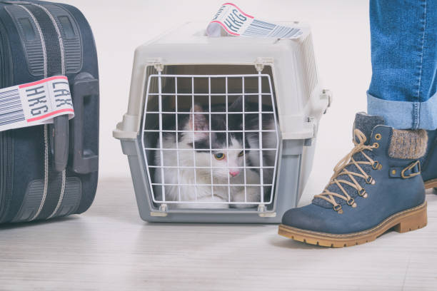 Katze in der Fluggesellschaft Fracht Heimtierfrachter – Foto