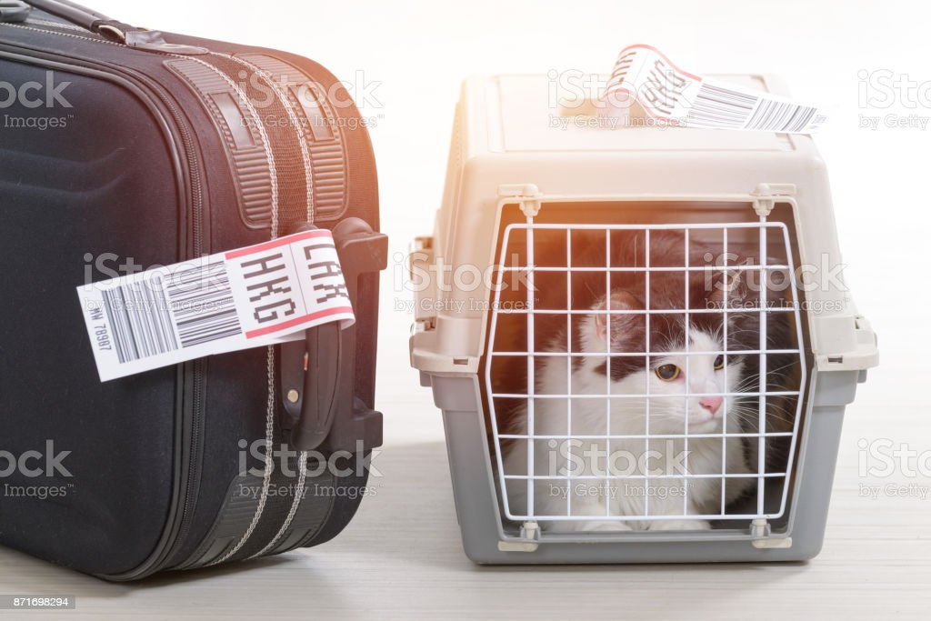 Cat in the airline cargo pet carrier stock photo