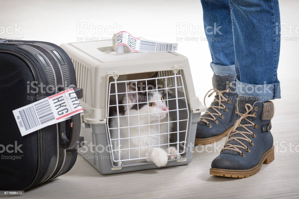 Katze in die Airline Cargo Transportbox – Foto