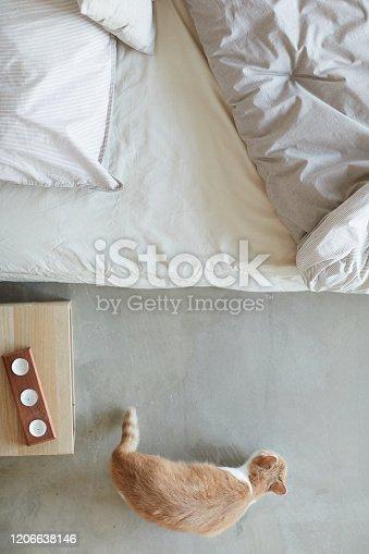 626958754 istock photo Cat in the bedroom 1206638146