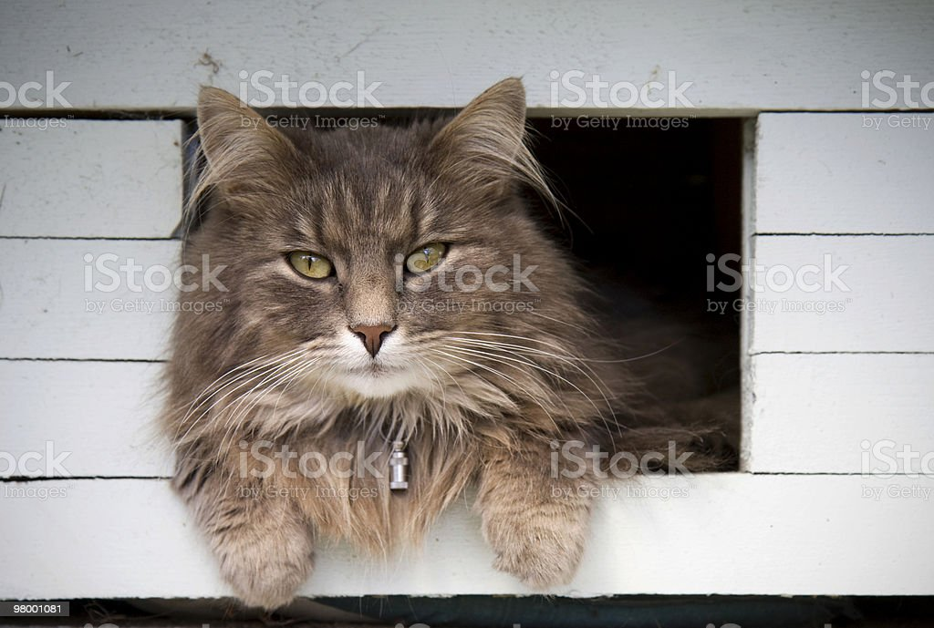 Cat in the birdhouse royalty-free stock photo