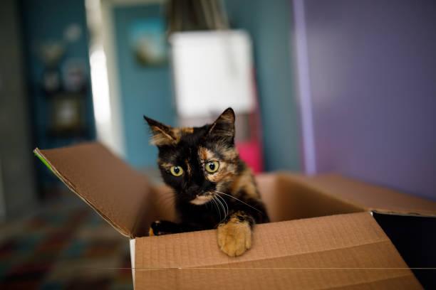 Cat in the box picture id1164406053?b=1&k=6&m=1164406053&s=612x612&w=0&h=djxk9evjfdrqjlw xh4xnuhw swaby8mllcrnurj0dy=