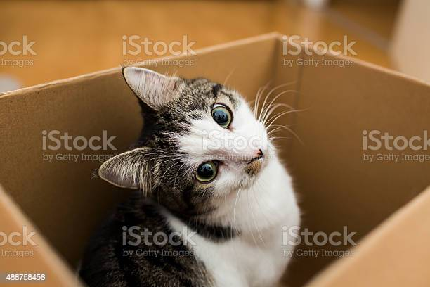 Cat in the box picture id488758456?b=1&k=6&m=488758456&s=612x612&h=kos6bvj61otkmssfhgwtbnazlnl6g8b lx2ofisaugq=