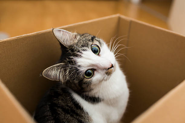 Cat in the box picture id488758456?b=1&k=6&m=488758456&s=612x612&w=0&h=hqyadfosgogt8wdw2q e3hjyzinnyngmso8xc3cppno=