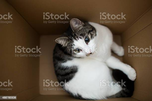 Cat in the box picture id488785508?b=1&k=6&m=488785508&s=612x612&h=mhe6dly8rlfrcwu72dydhogybogncdslx r4c0n lz4=