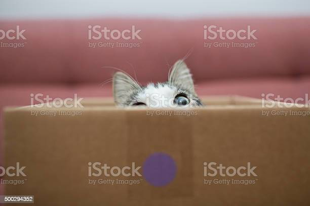 Cat in the box picture id500294352?b=1&k=6&m=500294352&s=612x612&h=3gjovheviczqxbid2ax4dkabar7p0au3a2jadlr3ycu=