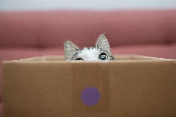 Cat in the box picture id500294352?b=1&k=6&m=500294352&s=612x612&w=0&h=uggou03wgq7tdjfy z0ylp3xqowvfaxh2 uyj7qexcs=