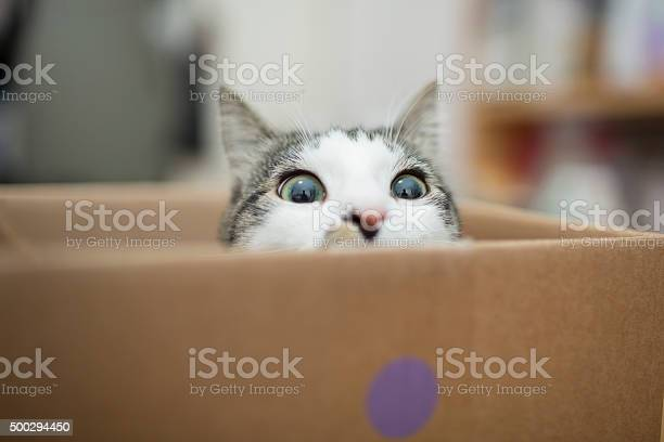 Cat in the box picture id500294450?b=1&k=6&m=500294450&s=612x612&h=mnuqbzkecleofepnbcjmtt nk vnd 9zpeqt8ozubdq=
