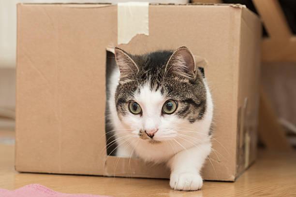 Cat in the box picture id585172684?b=1&k=6&m=585172684&s=612x612&w=0&h=pykd42timnazk5x6zfzjyovhfiluvq5b qafuqtcjuw=