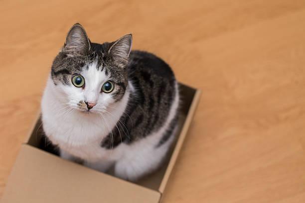 Cat in the box picture id615740286?b=1&k=6&m=615740286&s=612x612&w=0&h=jablvylwna vxwp84glh2xw71lkaj4w07nrxm8ptu1s=