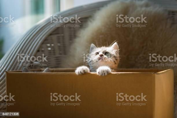Cat in the box picture id646121308?b=1&k=6&m=646121308&s=612x612&h=yc0ux a uek 0fo vuwlcsigkaapv2kkfsfuypoqvqg=