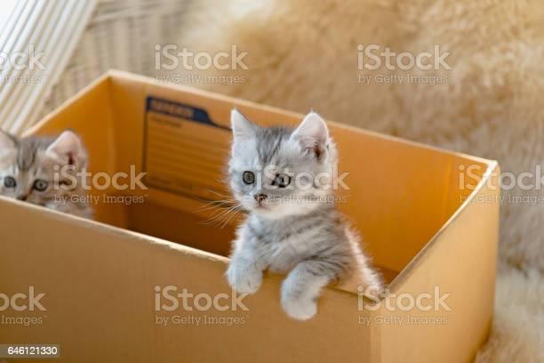 Cat in the box picture id646121330?b=1&k=6&m=646121330&s=612x612&h=tisv6 oj6hcd5z7tv4rlheobkeqz874qpzbdyzrrzfi=