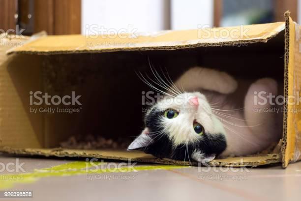 Cat in the box picture id926398528?b=1&k=6&m=926398528&s=612x612&h=rp8s jmm1yb0szndt7opyc7icbhtwavjohh4ud4rf20=