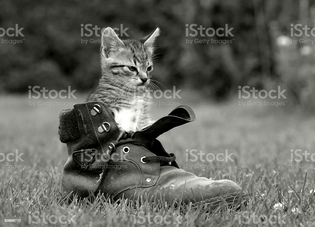 Cat in the brogue stock photo