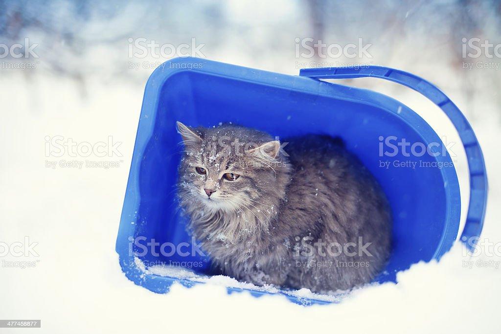 Cat in the bucket stock photo