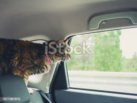 Cat peeking out of the window, traveling