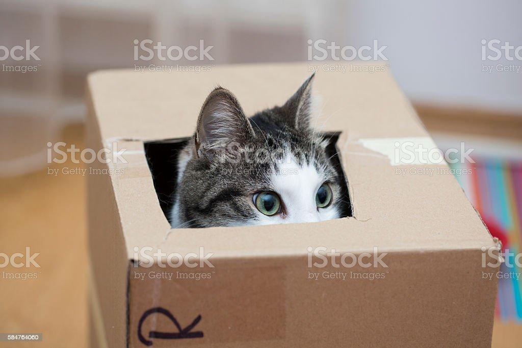 cat in the cardboard box stock photo