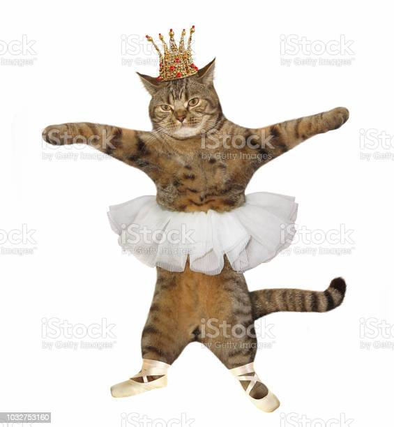 Cat in the crown and pointe shoes picture id1032753160?b=1&k=6&m=1032753160&s=612x612&h=ty91sl6ry2ndfabswnpoza4nqzl8ezrajgjrr78dgcq=