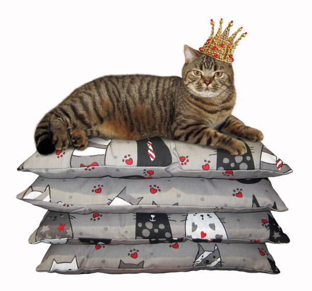 Cat in the crown lies on pillows stock photo