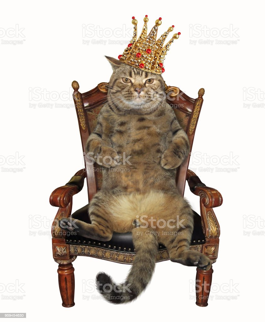 Cat in the crown on an armchair stock photo