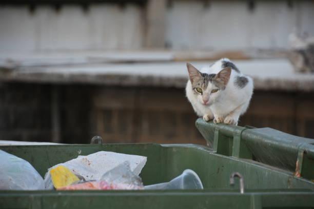Cat in the Dumpster – zdjęcie