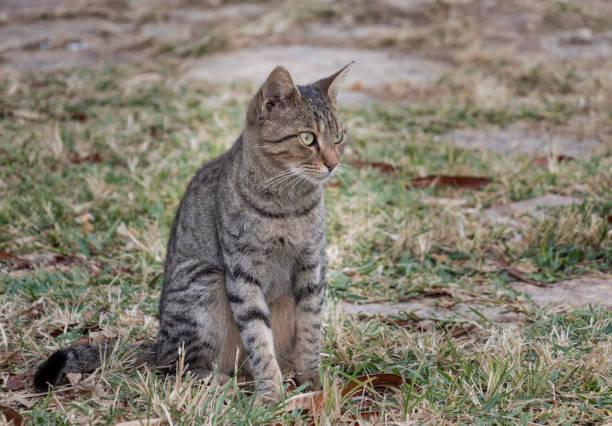sonbaharda kedi - serpilguler stok fotoğraflar ve resimler